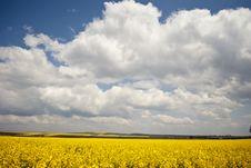 Free Yellow Field Stock Photos - 20255623