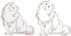 Free Cats-kitten Royalty Free Stock Photo - 20255815