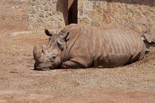 Free Rhino In Safari Park Stock Photography - 20258252