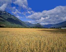Free Field Under Mountains Stock Photos - 20258423