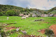 Free Cattle Farm Stock Photos - 20258763
