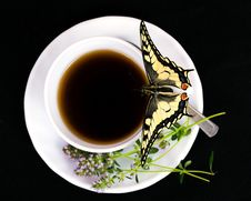 Free Butterfly And Cup. Stock Image - 20258791