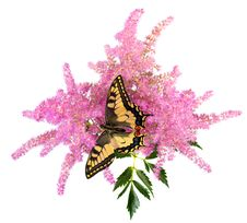 Free Tiger Swallowtail (Papilio Glaucus) Butterfly Stock Photos - 20258903