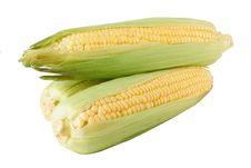 Free Fresh Corn Royalty Free Stock Photos - 20259788