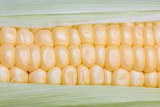 Free Fresh Corn Stock Image - 20259921