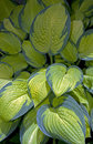 Free Green Leaves As Texture Stock Photos - 20261883