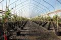 Free Greenhouse Plant Nursery, Oregon Stock Images - 20263724