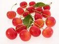 Free Red Cherries Royalty Free Stock Photo - 20267115