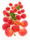 Free Red Cherries Stock Photography - 20267172