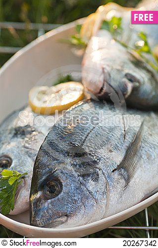 Free Raw Fish Stock Photography - 20267342