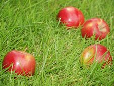 Free Apples In The Grass Royalty Free Stock Image - 20260786