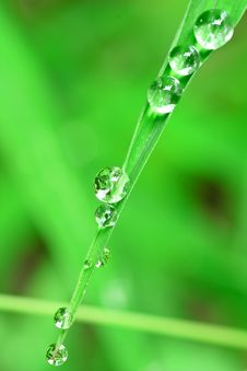 Free Water Dew Drops Stock Image - 20261891