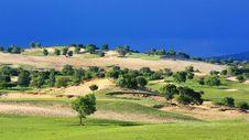 Free Landscape  Of   Grassland Royalty Free Stock Photos - 20262508