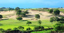 Free Landscape  Of   Grassland Royalty Free Stock Photo - 20262525
