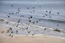 Free Sea Gulls Stock Photo - 20263460