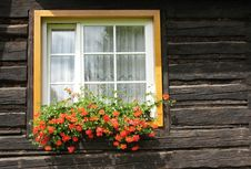 Free Window With Muscatel. Stock Photo - 20263470