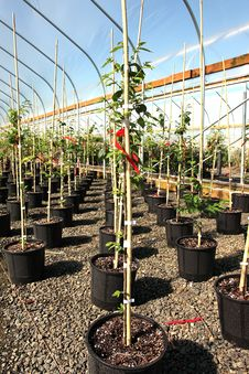 Free Greenhouse Plant Nursery, Oreg Royalty Free Stock Photo - 20263715