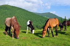 Free Horses On A Summer Pasture Royalty Free Stock Photo - 20263905