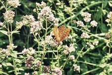 Free Butterfly Stock Image - 20264341