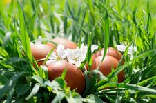 Free Easter Eggs In Grass Stock Image - 20264461