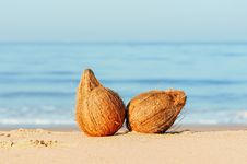 Free Coconuts Stock Photography - 20264582