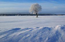 Free Winter Landscape - Russia Stock Photo - 20265180