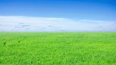 Free Background Of Cloudy Sky And Grass Stock Photography - 20266192