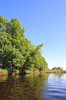 Free Oak Wood Stock Images - 20266414