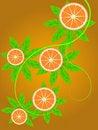 Free Branch Of An Orange Stock Photo - 20272670