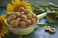 Free Apricots And Sunflower Stock Image - 20274611