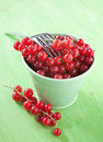 Free Red Currants Stock Photography - 20277602