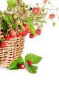 Free Fresh Wild Strawberry Stock Images - 20277994