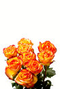 Free Roses On White Royalty Free Stock Images - 20278429
