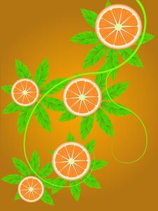 Free Branch Of An Orange Stock Photo - 20272670