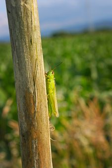 Free Green Insect On A Tree Stock Photo - 20274010