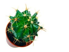 Free Cactus Royalty Free Stock Photography - 20274247