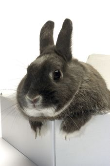 Portrait Of A Rabbit In A Box Stock Photo