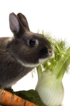 Portrait Of A Rabbit And His Favorite Vegetables Stock Images