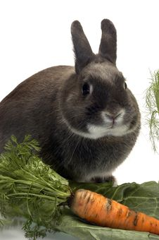 Free Portrait Of A Rabbit And His Favorite Vegetables Stock Photo - 20275450