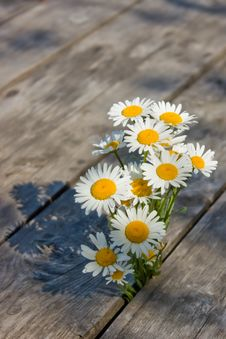 Free Bouquet Of Daisies Royalty Free Stock Images - 20275869