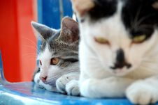 Free Two Cat Royalty Free Stock Photo - 20276095
