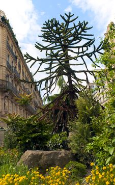 Free Decorative Fir  Tree In A Street Of Paris Royalty Free Stock Photos - 20276258