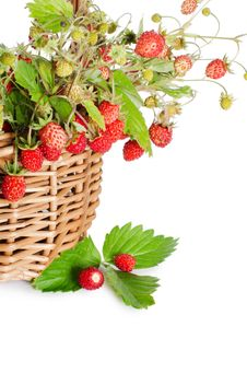 Free Fresh Wild Strawberry Stock Images - 20277994