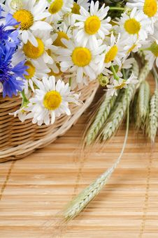 Free Beautiful Flowers In A Basket Royalty Free Stock Image - 20278066