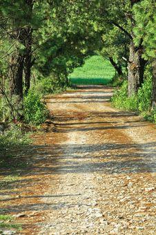Free Path Through Green Forest Stock Photos - 20278553
