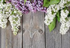 Free Beautiful Lilac Royalty Free Stock Photography - 20279187