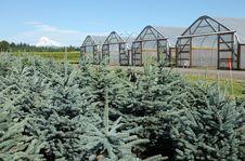 Free Greenhouse Plant Nursery, Oregon Stock Photography - 20279242