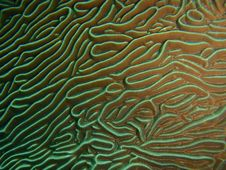 Hardcoral Structure Stock Images