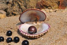 Free Seashell Stock Images - 20279954