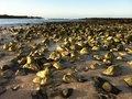 Free Rocks On The Beach In Sunlight Stock Photo - 20280910